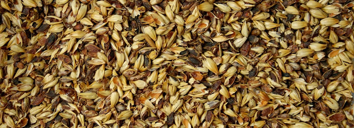 Specialty Grains and Malts
