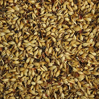 Crystal 60L Malt - 1 LB /